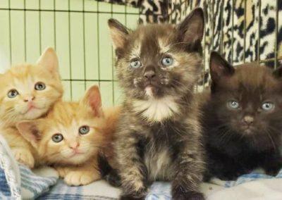 Pet Pals kittens
