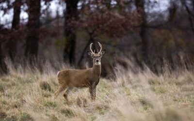 Top 10 hunting violations during firearm deer season