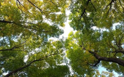 How should you shop for forest land?