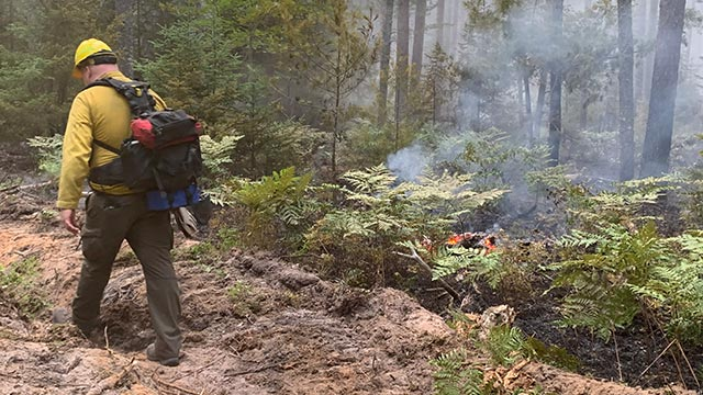 Wildland Fire in Pictured Rocks National Lakeshore