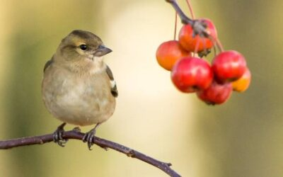 Watch this: Fall back into birding